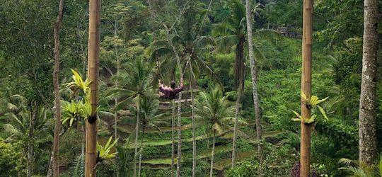 Arbeiten von Überall: Madeleine von Freelance Partner im Regenwald auf Bali